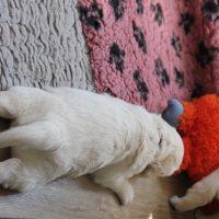 Der K-Wurf 3 Wochen alt